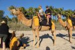 Camel ride in Agadir beach